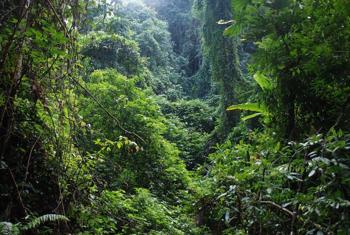 2,热带雨林(拍摄于西双版纳原始热带雨林景区)